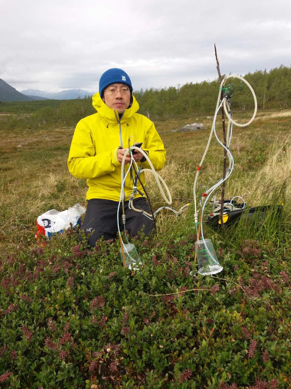 Biologe Tao Li hat herausgefunden, wie Pflanzen in der Arktis auf Klimaerwärmung und vermehrten Insektenfraß reagieren.  Credit: Jolanta Rieksta