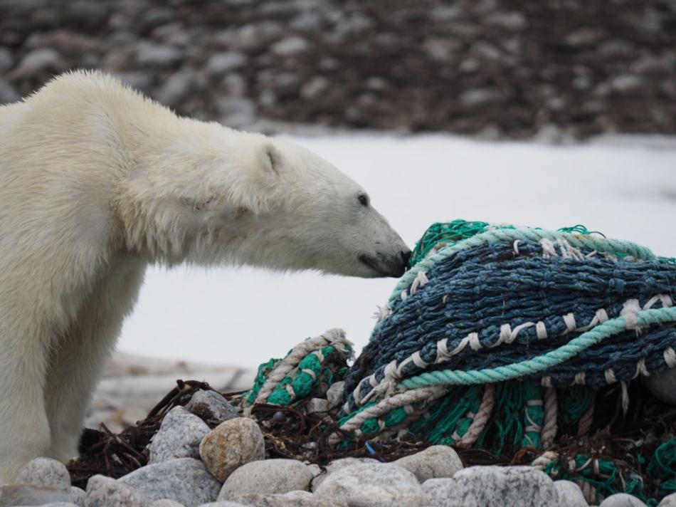 Müll im Meer ist eine Bedrohung für die lokale Tierwelt. (Foto: Zet Freiburghaus, Polar Quest)